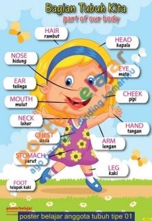 poster belajar anggota tubuh tipe 01