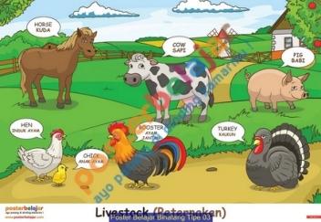 Poster Belajar Binatang Tipe 03